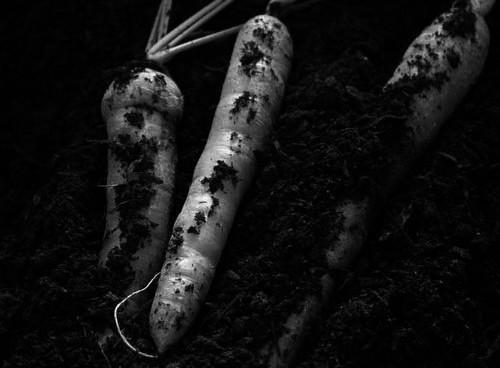 Guia de cultivos de otoño-invierno