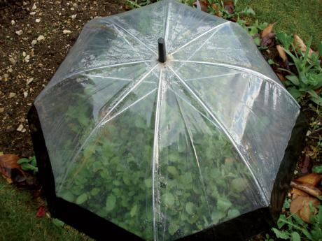 Umbrella-Cloche.standard 460x345