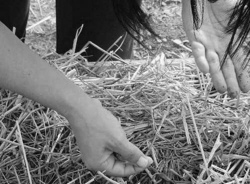 El huerto no es solo cultivar