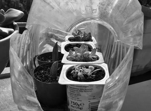 Cuida tus plantas del frio